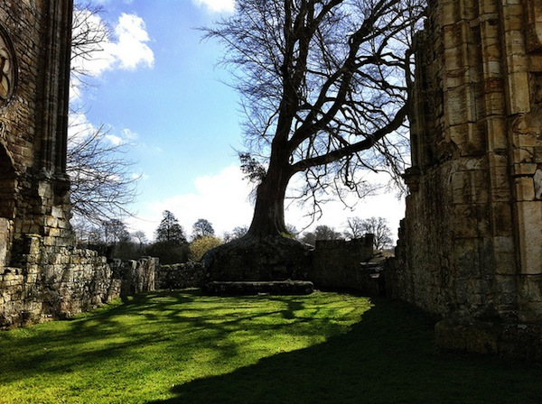 A tree growing pleasingly above where the High Altar once was.