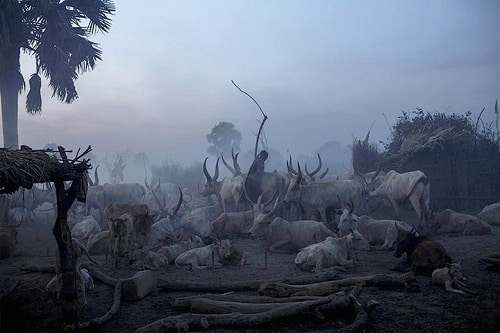 A man from the Dinka ethnic group stands amoungst the cattle in Yirol